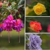 浪漫玫瑰花:相簿封面
