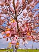 2020 與春天有約 三月 花旗木:IMG_20200327_090327_調整大小.jpg