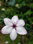 新生公園 玫瑰花:IMG_20210331_172700_調整大小.jpg