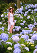 午後陽光 繡球花田:DSC_0610_調整大小.JPG
