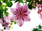 新生公園 玫瑰花:IMG_20210331_172752_調整大小.jpg