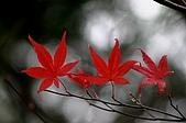 太平山11-5-98:IMG_0619.JPG