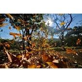 湖岸落羽松 原住民文化主題公園:相簿封面