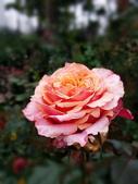 新生公園 玫瑰花:IMG_20210331_172816_調整大小.jpg