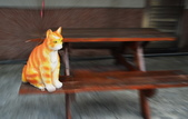 貓教室:DSC_2385_調整大小.JPG