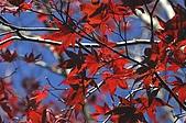 太平山11-5-98:IMG_0507.JPG