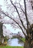 日本 平成時期的最後櫻花...2019:33FD9868-18B3-4E8E-B439-993754AB7D71_調整大小.jpg