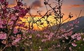 夜幕 陽明山噴泉 賞:DSC_0526_調整大小.JPG