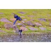 藍鵲群戲:相簿封面