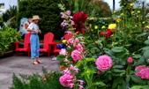 新生公園 玫瑰花:IMG_20210331_175714_調整大小.jpg