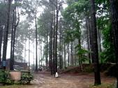 松濤營地動植物5-14:DSC02579.JPG