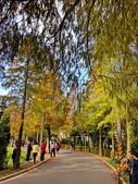 落羽杉季節:IMG_20201213_142207_調整大小.jpg