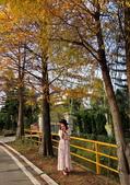 落羽杉季節:IMG_20201213_142306_調整大小.jpg