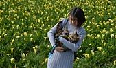 黃色 海芋田:DSC_0197_調整大小.JPG