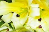 台南的花:_DSC0143.JPG