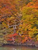 中禪寺湖 楓景:DSC_0309_調整大小.JPG