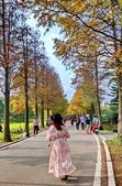 落羽杉季節:IMG_20201213_142313_調整大小.jpg