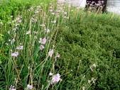 松濤營地動植物5-14:DSC02584.JPG