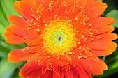 台南的花:_DSC0144.JPG