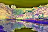2019 原住民文化公園:DSC_0019g_調整大小.jpg