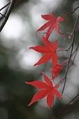 太平山11-5-98:IMG_0623.JPG