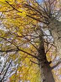 落羽杉季節:IMG_20201213_142321_調整大小.jpg
