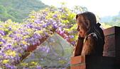 粗坑窯 紫藤:DSC_9507_調整大小.JPG