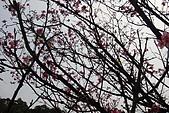 北新莊-太陽鳥:DSC03453.JPG