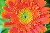 台南的花:_DSC0145.JPG