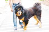 獒犬:image401_調整大小.JPG
