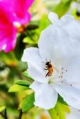 台大杜鵑花節2021:DSC_0309_調整大小.JPG