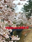 日本 平成時期的最後櫻花...2019:247FD5C5-23F5-42C4-B627-94D199B348A5_調整大小.jpg