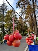 落羽杉季節:IMG_20201213_144749_調整大小.jpg