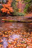 雨中 湯湖:DSC_0773_調整大小.JPG