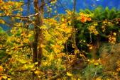 銀杏森林:DSC_0987_調整大小.JPG