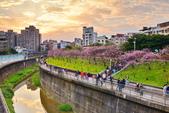 內湖 櫻花 2020:DSC_0819_調整大小.JPG