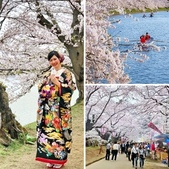 日本 平成時期的最後櫻花...2019:相簿封面