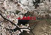 弘前公園 櫻花祭 花見:2F5ED152-D344-491F-ACED-BD158A035BAD_調整大小.jpg