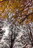 落羽杉季節:IMG_20201213_142330_調整大小.jpg