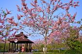 春色滿園 花旗木:DSC_0314_調整大小.JPG