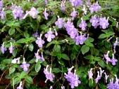 松濤營地動植物5-14:DSC02536.JPG