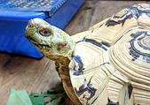 有蛇龜寵物的咖啡店: