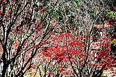 太平山11-5-98:IMG_0520.JPG