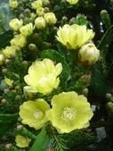 松濤營地動植物5-14:DSC02551.JPG