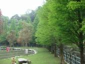 武陵.福壽山農場.太陽烏:DSC04245.JPG