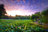 植物園夕彩:DSC_2933_調整大小.JPG