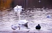 英國 白金漢宮 公園:DSC_0483_調整大小.JPG
