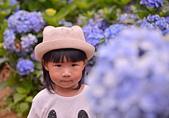 繡球花ˊ習拍:DSC_0235_調整大小.JPG