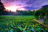 植物園夕彩:DSC_2983_調整大小.JPG