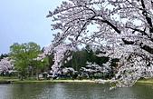 日本櫻花見:6C969BF3-8FF3-4205-B9C3-1EAC507BD350_調整大小.jpg